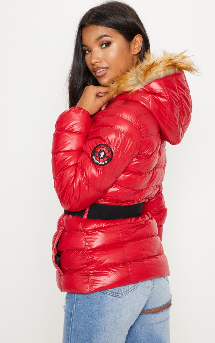 Red Belted Puffer  2