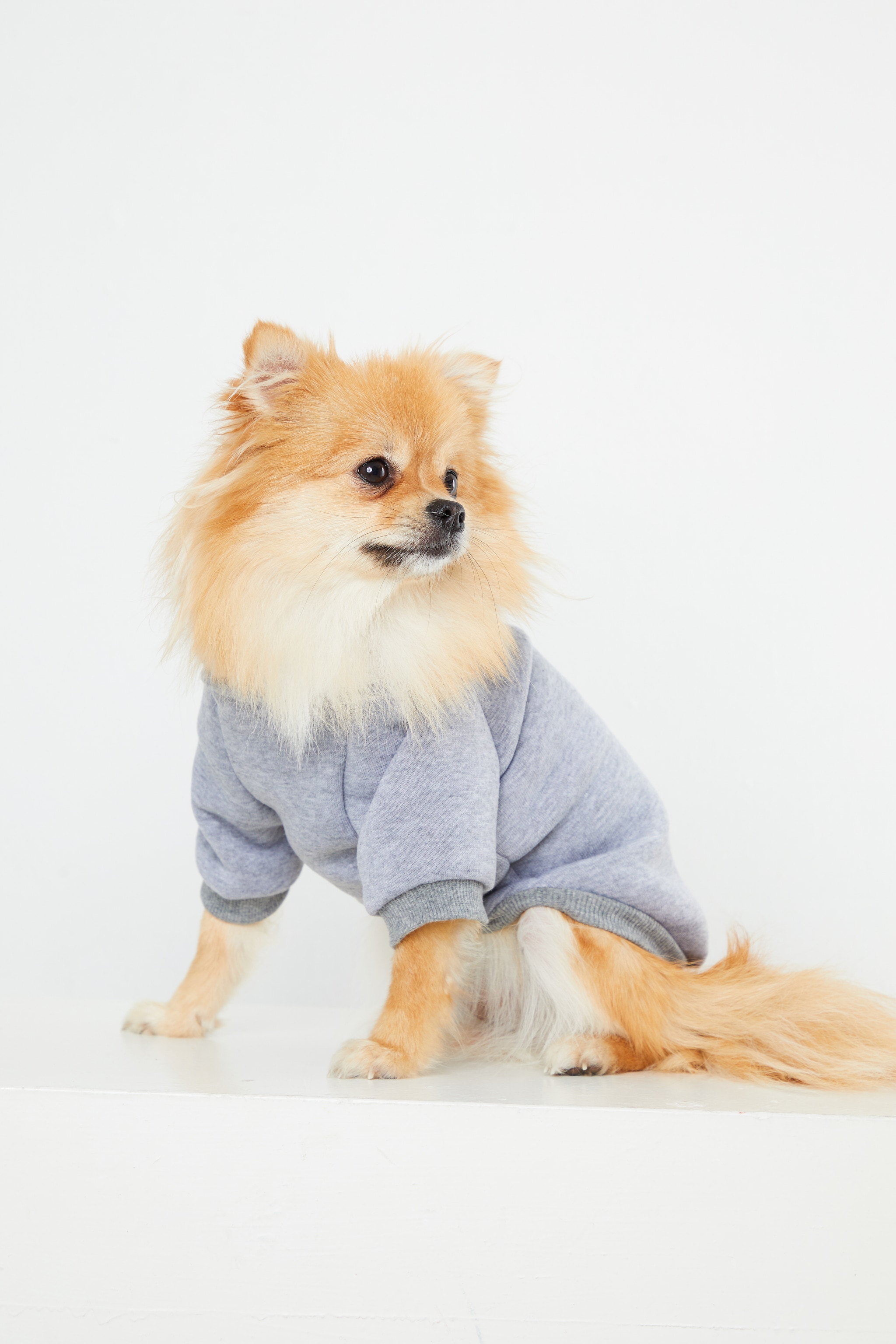 Grey Doggy Hoodie 1