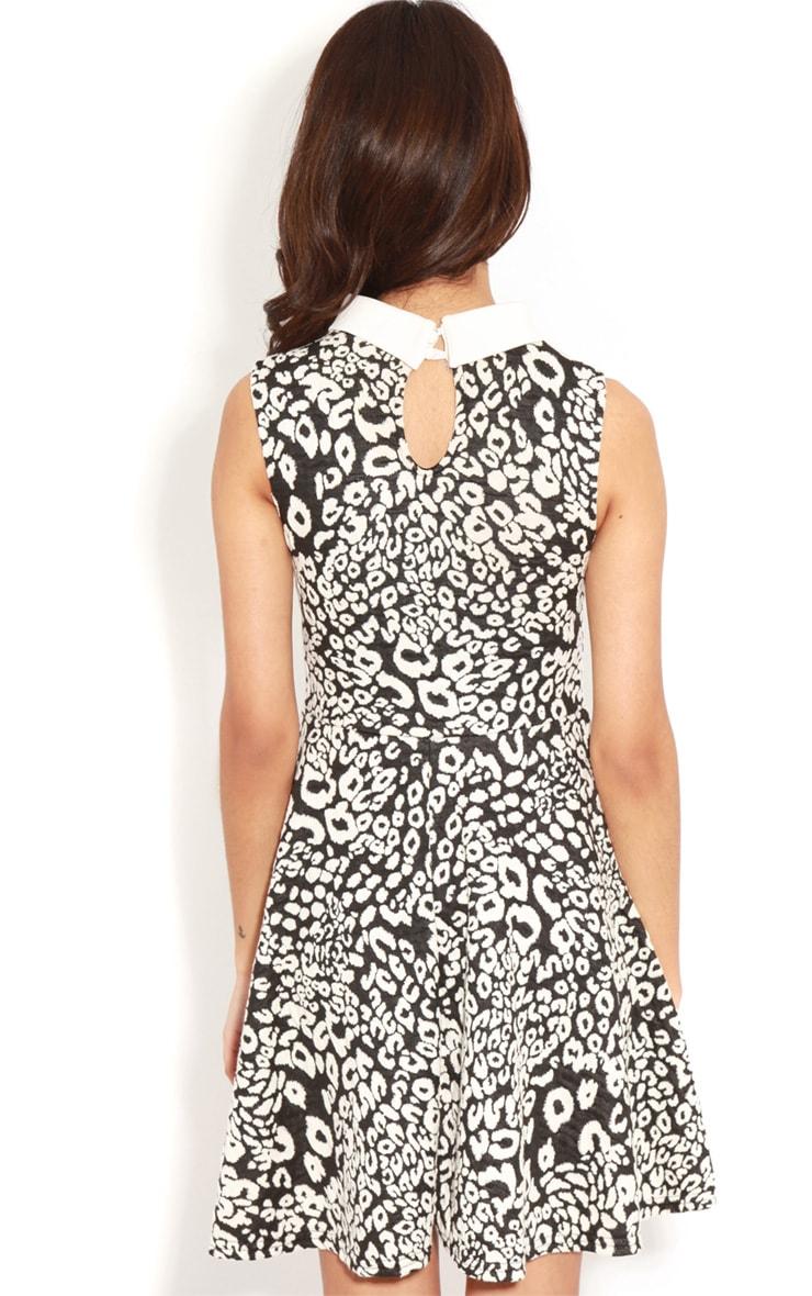 Parma Black & White Leopard Collar Skater Dress 2