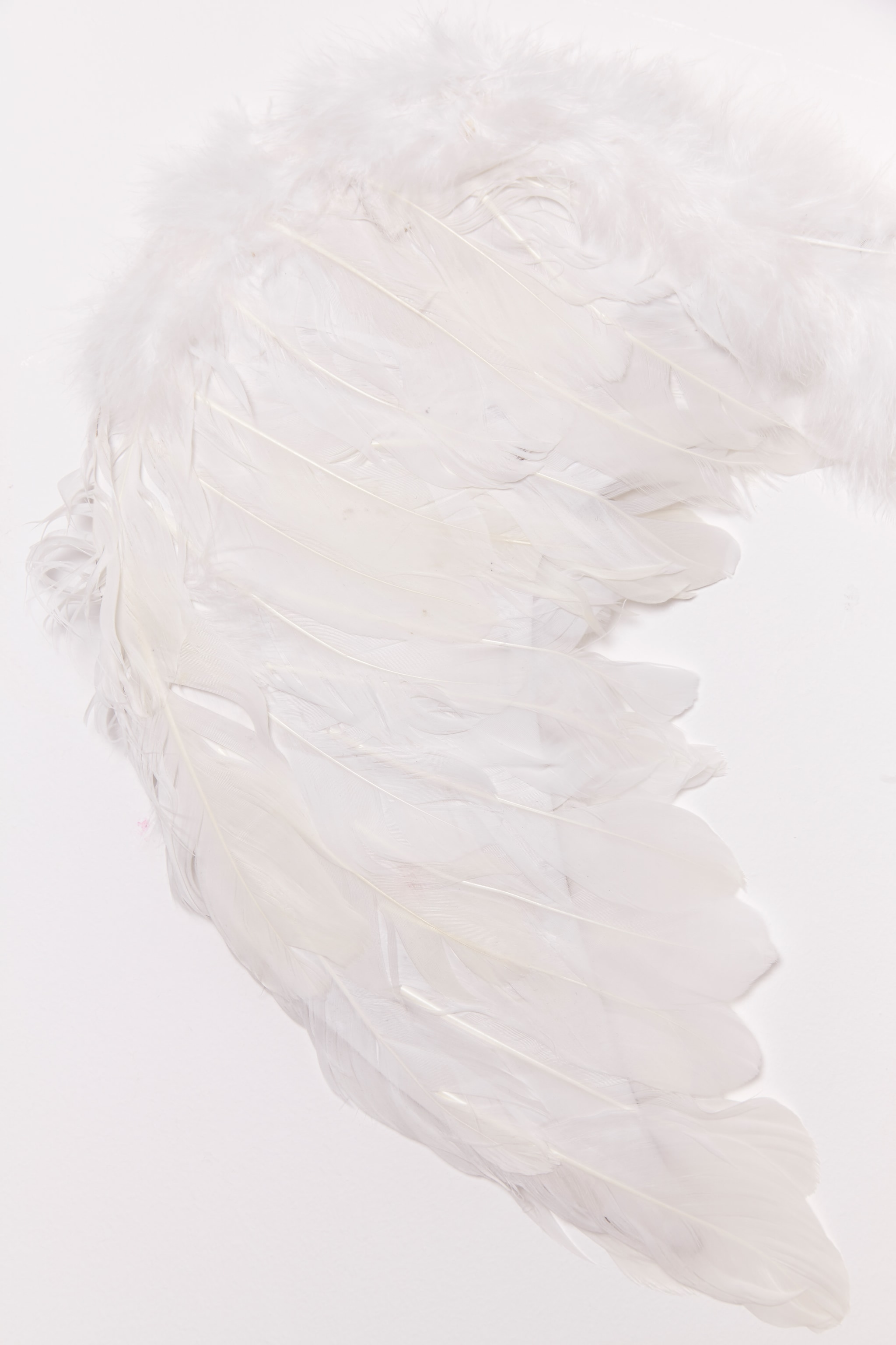 White Feather Angel Wings 6