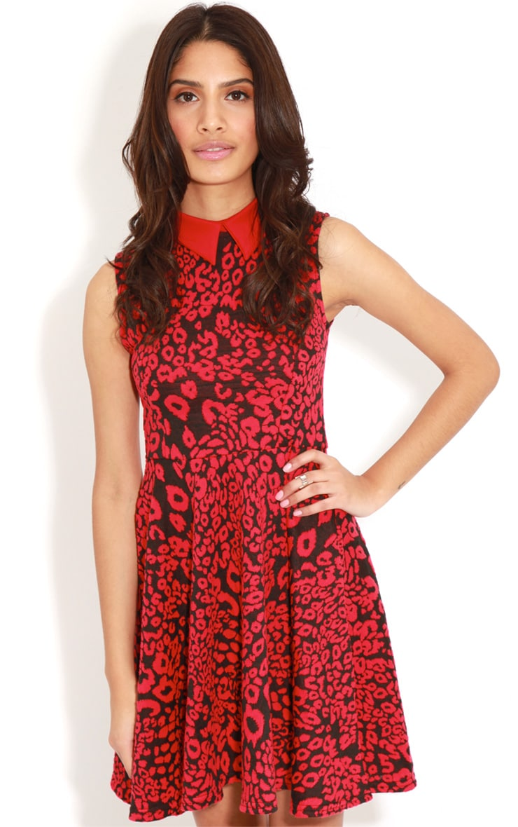 Parma Red & Black Leopard Collar Skater Dress  4
