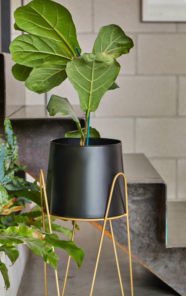 Black Planter With Gold Stand 3