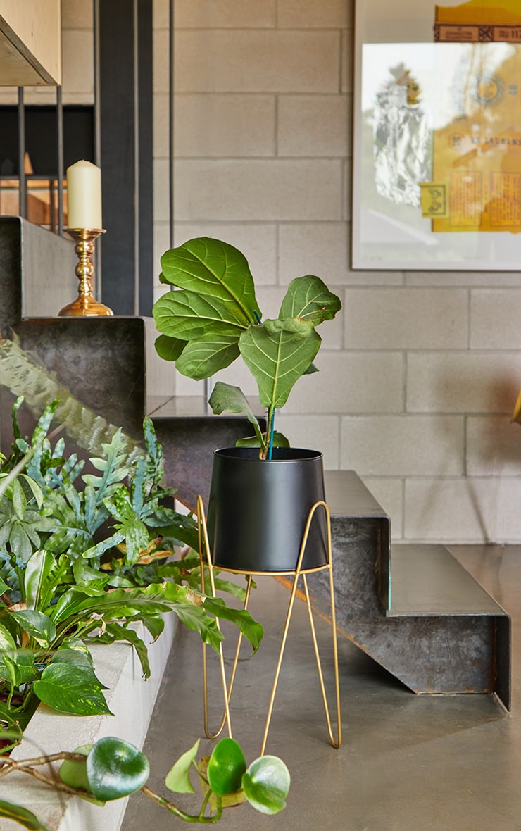 Black Planter With Gold Stand 2
