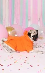 Orange Doggy Hoodie 1