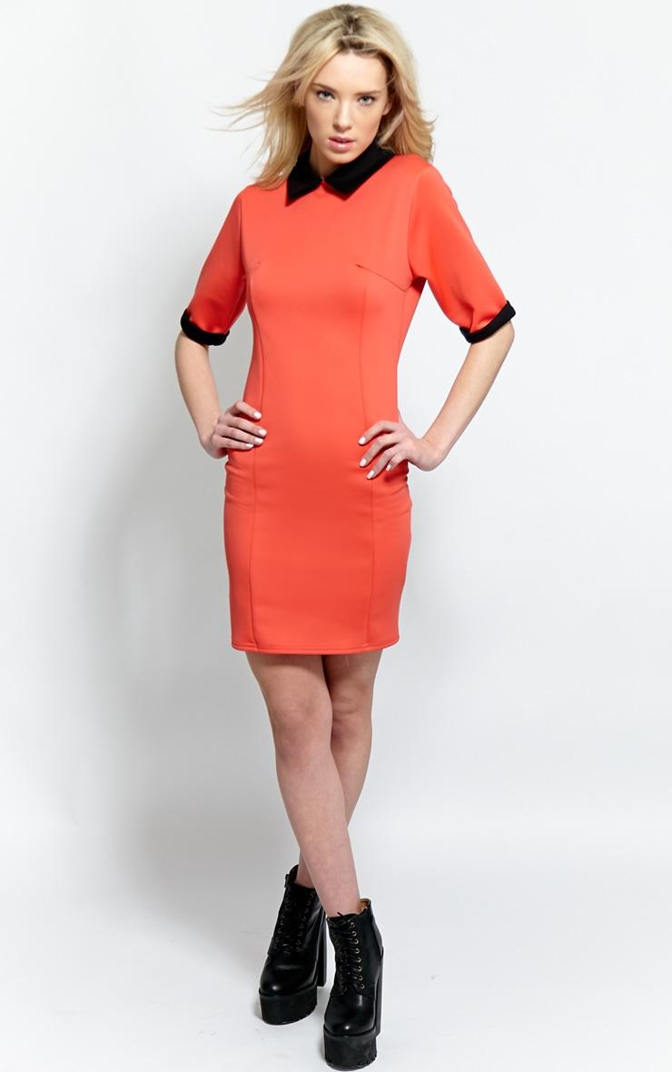Katrina Coral Collar Dress 3
