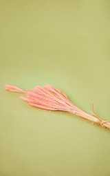 Pink Dried Fluffy Coloured Grass 3