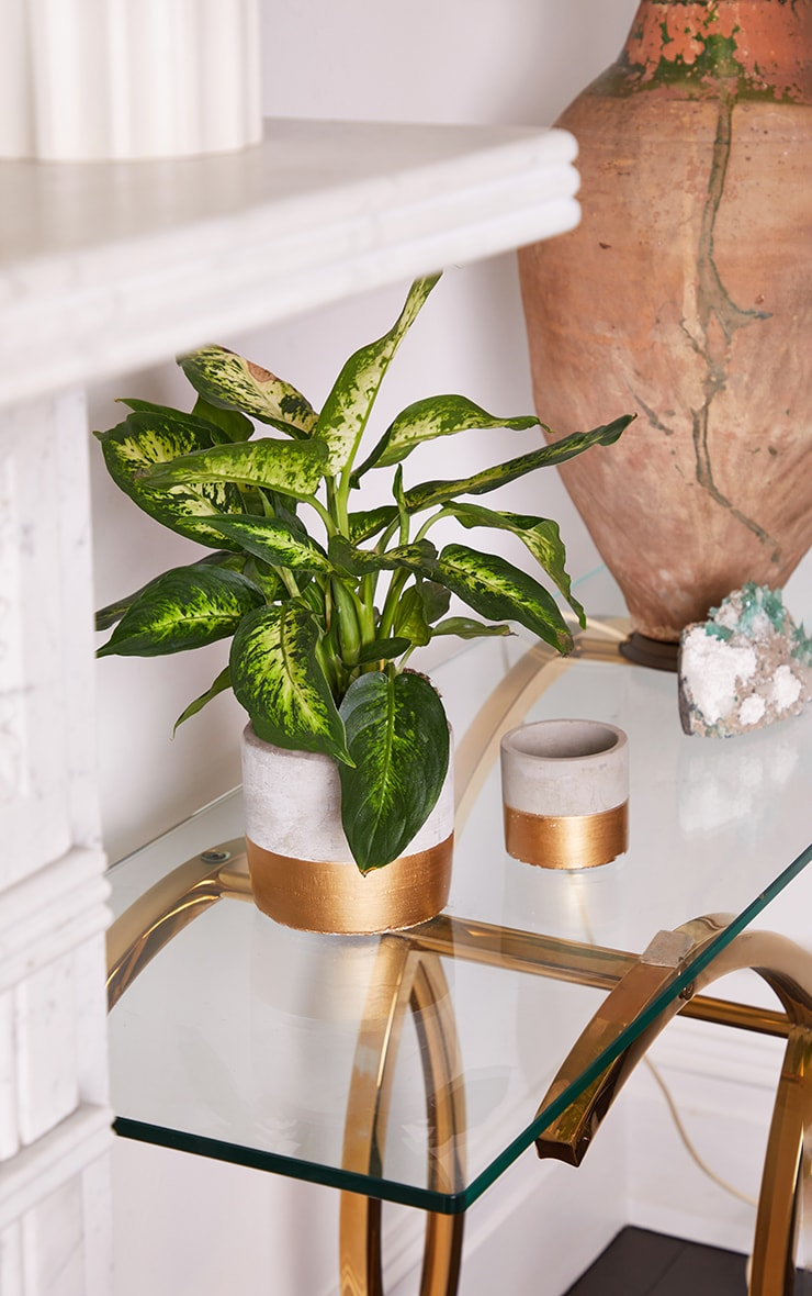 Gold Dipped Planters 2 Pack 1