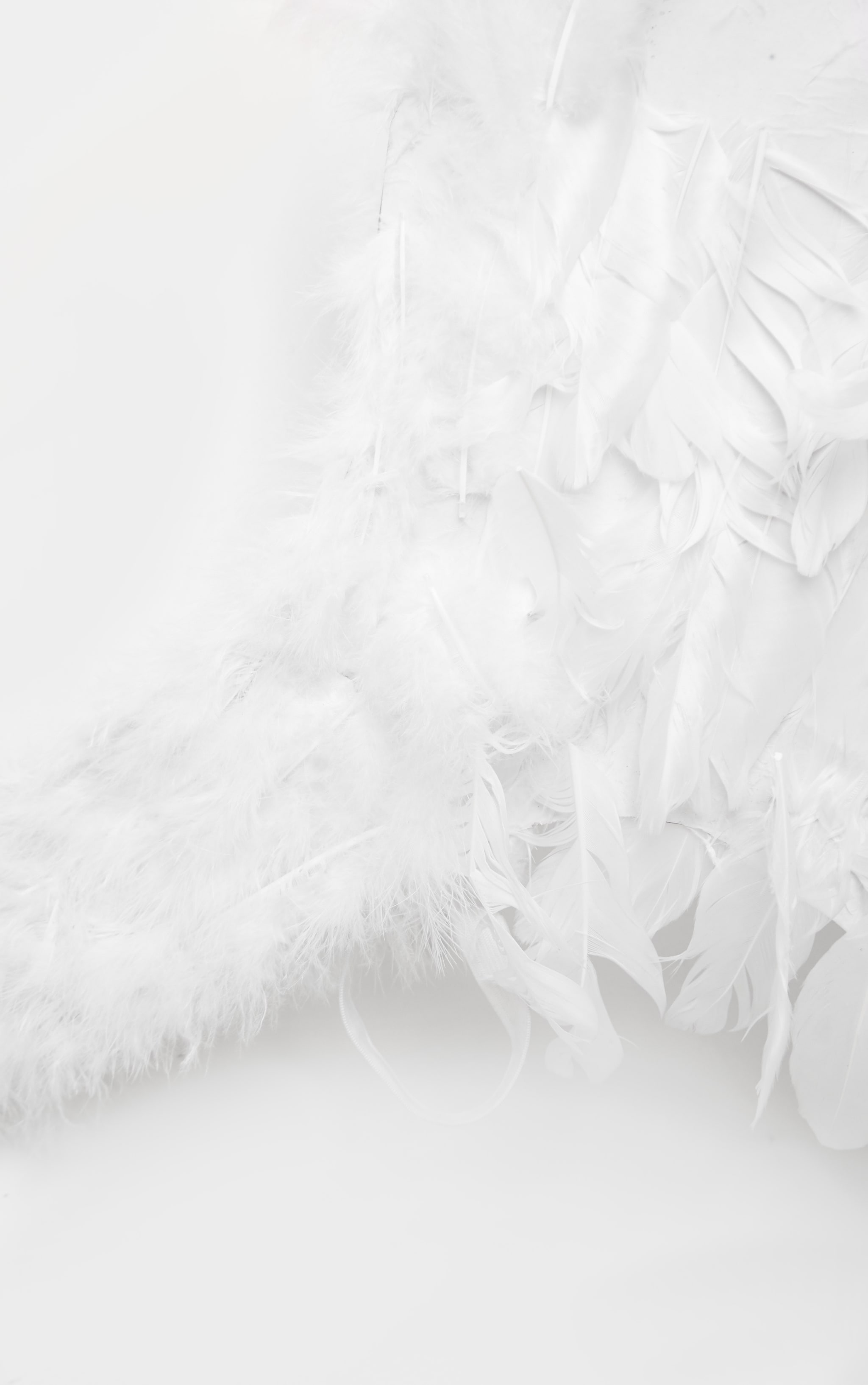 White Extra Large Feather Angel Wings  3