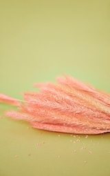 Pink Dried Fluffy Coloured Grass 4