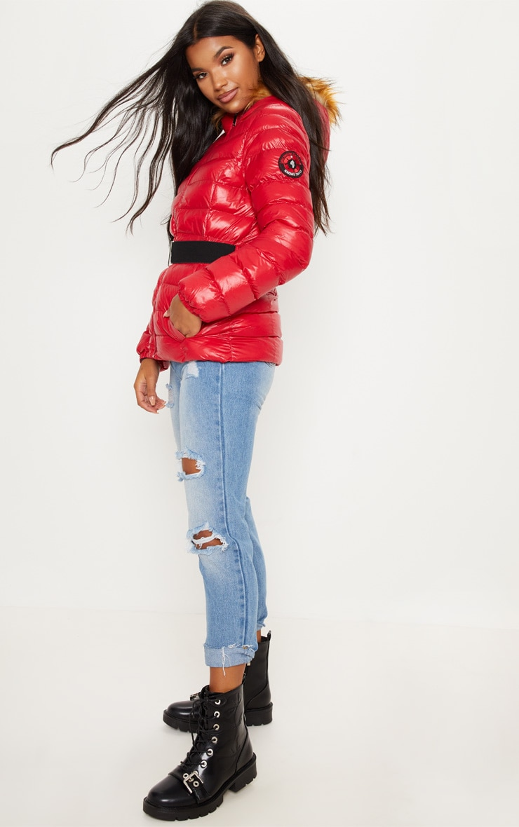 Red Belted Puffer  4