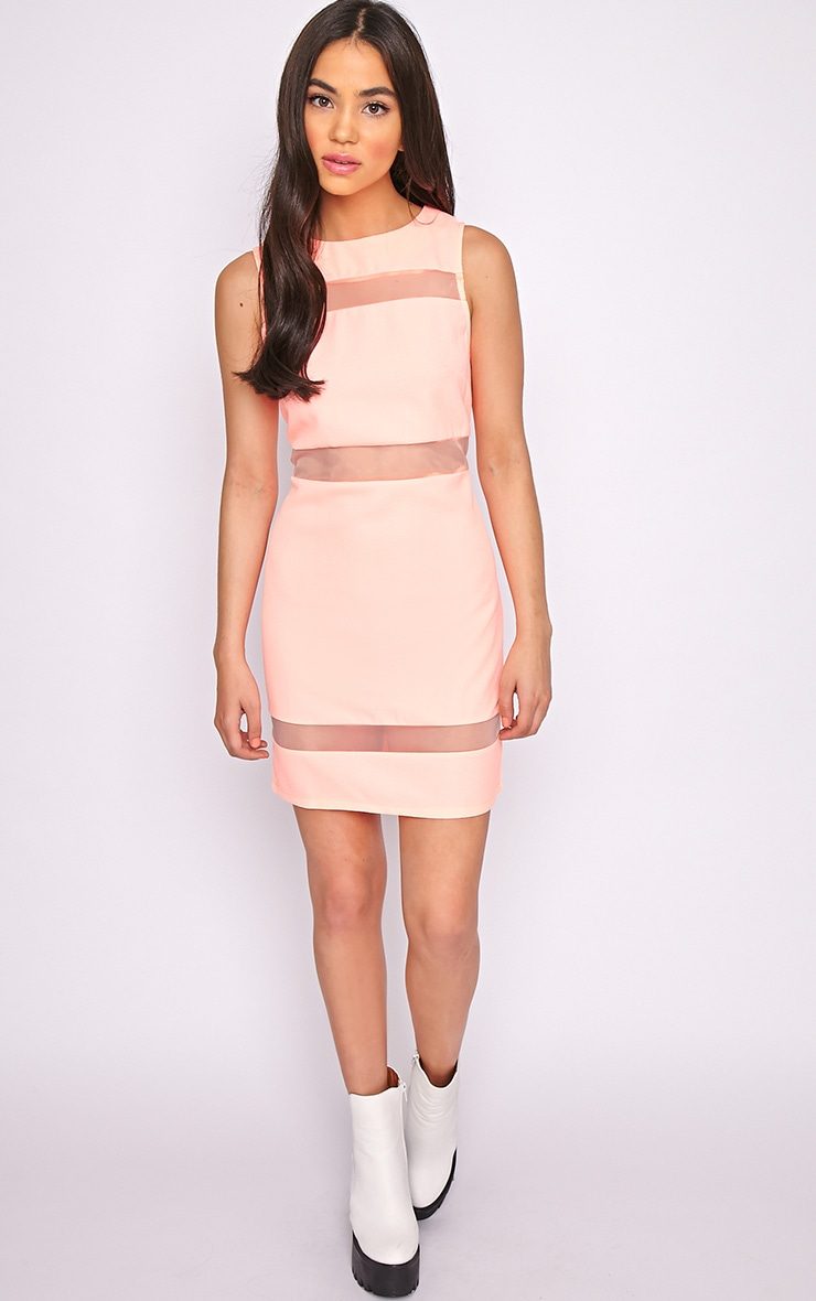 Amelie Coral Mesh Insert Dress  1
