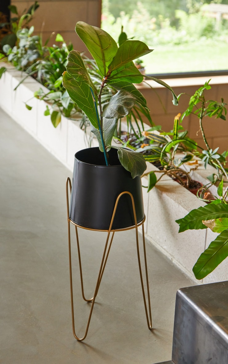 Black Planter With Gold Stand 1