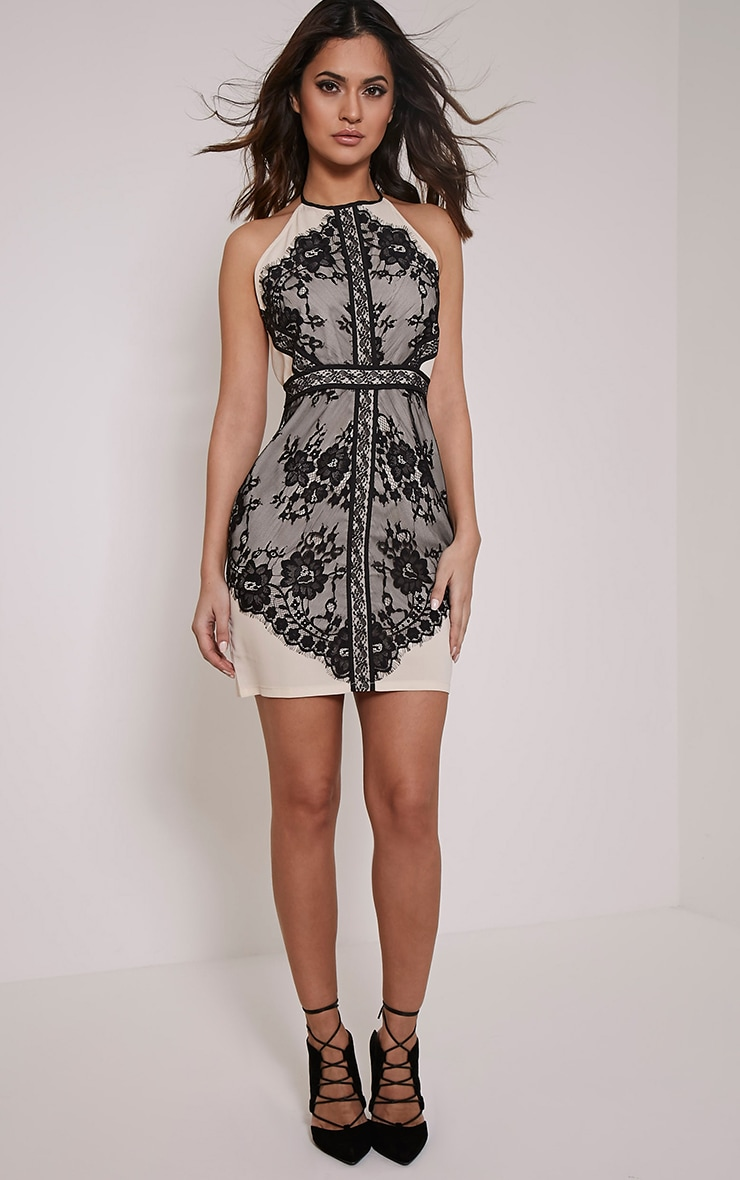 Anita Black Lace Mesh Detail Halterneck Bodycon Dress 5