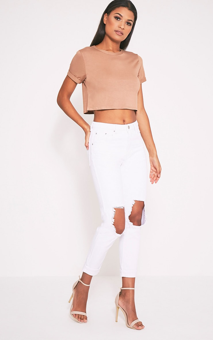 Basic Camel Roll Sleeve Crop T Shirt 5